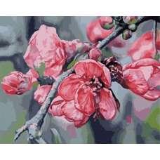 "Картина по номерам раскраска ""Ветка яблони"""