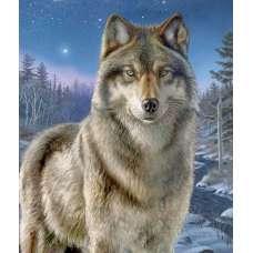 "Картина по номерам раскраска ""Волк"""