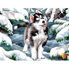 """Картина по номерам раскраска """"Щенок в снегу"""""""