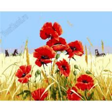 """Картина по номерам раскраска """"Маки в поле"""""""