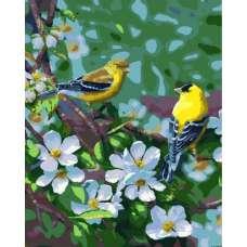 """Картина по номерам раскраска """"Дивные птицы"""""""