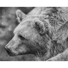 "Картина по номерам раскраска ""Медведь"""