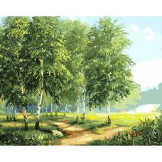"""Картина по номерам раскраска """"Березовый лес"""""""