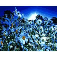 """Картина по номерам раскраска """"Ромашковое поле ночью"""""""