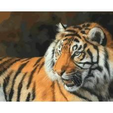 """Картина по номерам раскраска """"Тигр вблизи"""""""